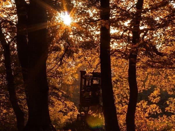 Sonne scheint morgens im Wald
