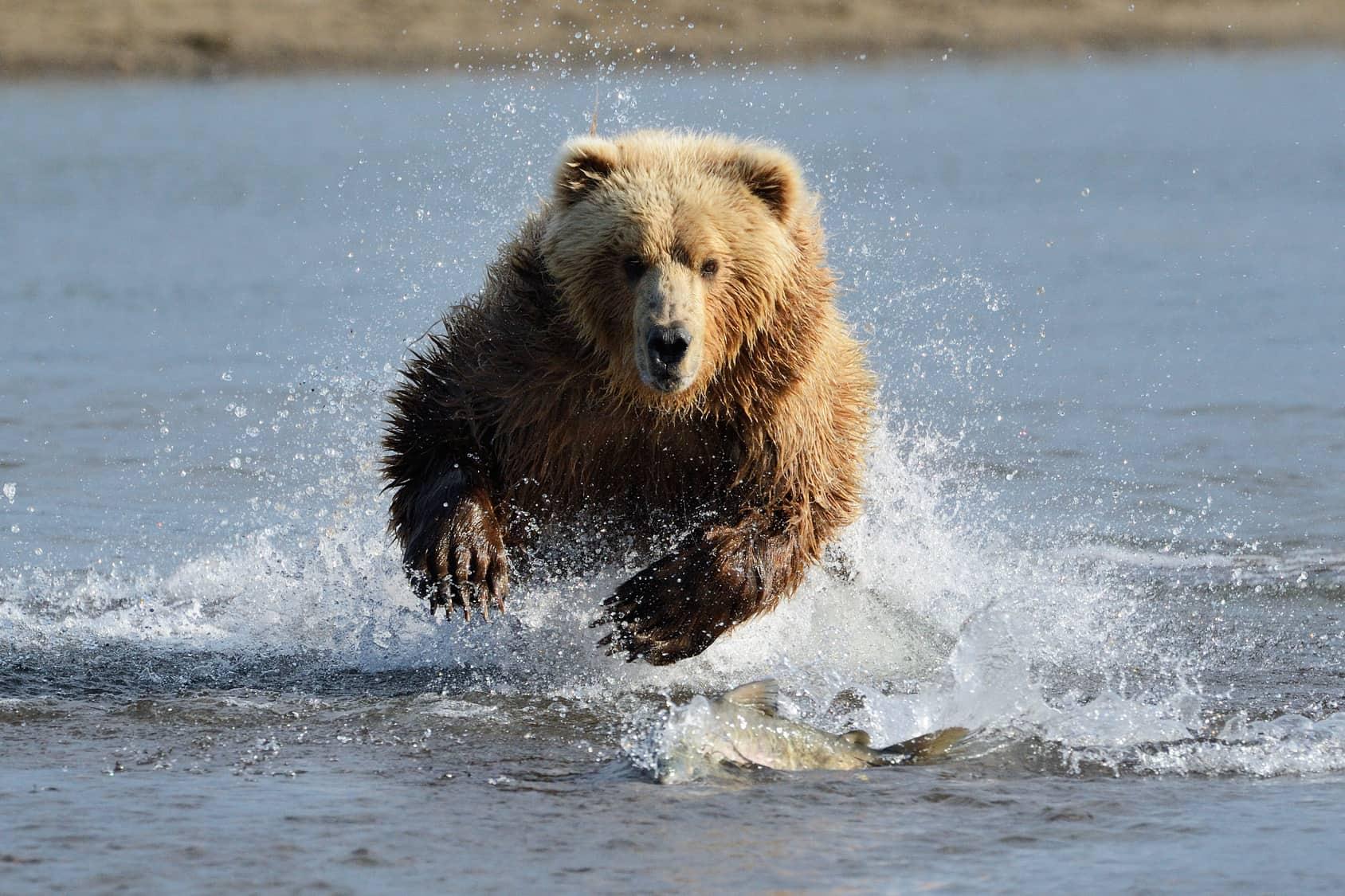 Front Running: Bär macht Jagd auf Indexanleger