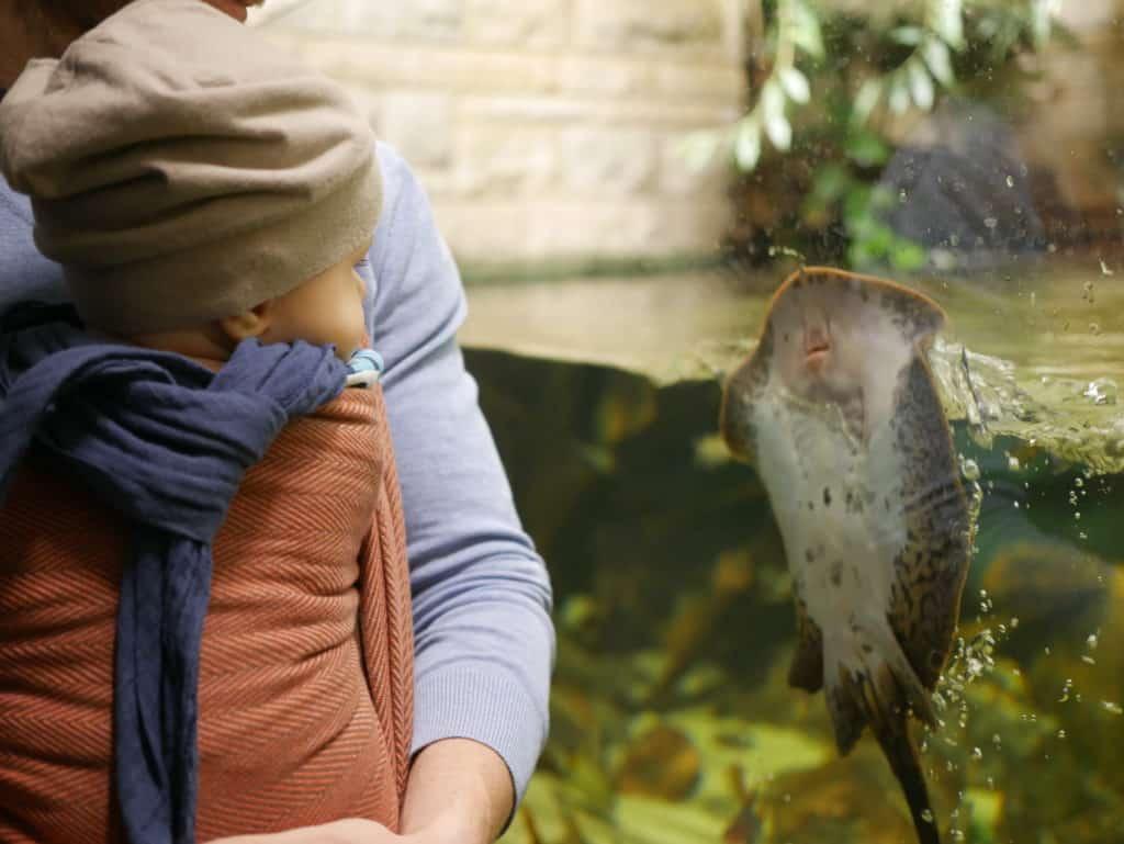 Sparen Baby: Für unser Kind gibt es im Zoo einiges zu entdecken. Die Jahreskarte ist auf Dauer deutlich günstiger als die Tageskarte.