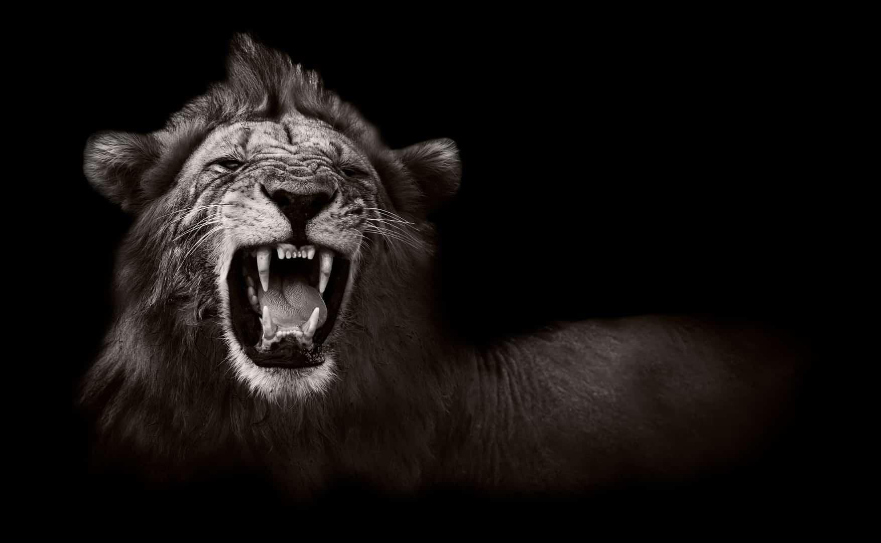 Schreiender Löwe steht dafür Normen zu brechen und sich aufzumachen, glücklich zu sein