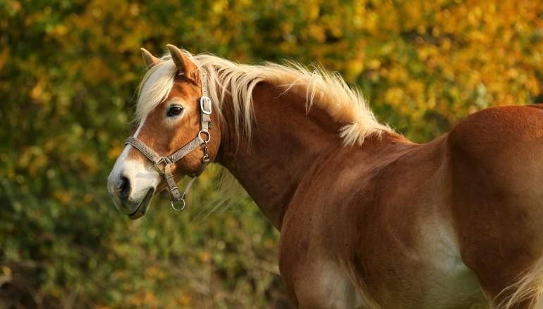 Wenn dir ein Pferd auf den Fuß steigt …